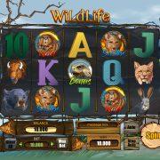 wildlife_reels