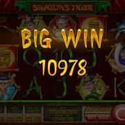 shaolins-tiger_bigwin