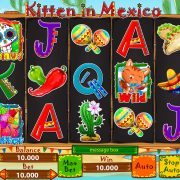 kitten-in-mexico_reels