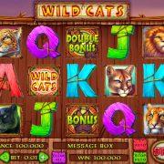 wild_cats_reels
