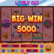lovely_cat_desktop_bigwin